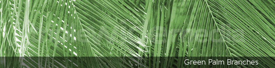 Green Palm Branches | TripleWide Media